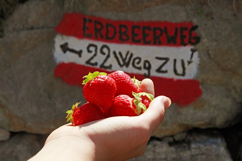 Erdbeeren im Martelltal